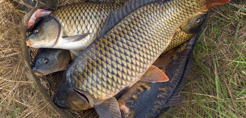 电热石墨消解仪——淡水食用鱼中重金属的消解方法