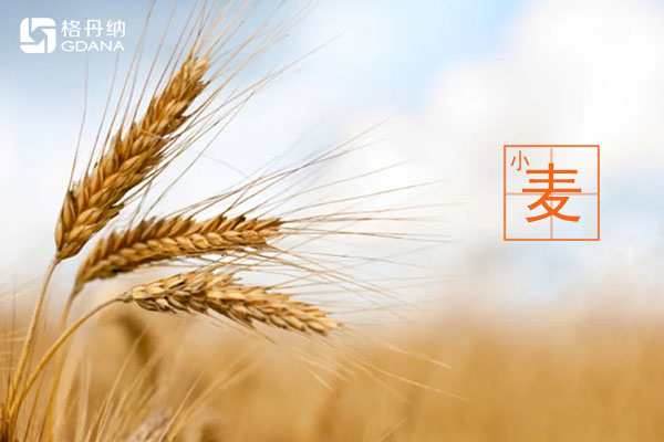 D6智能石墨消解儀處理小麥、玉米、糙米消解方案