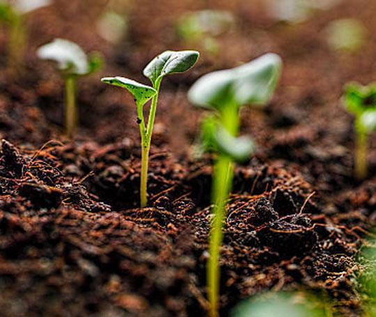 土壤中铅元素的测定用D4智能石墨消解仪四酸消解法完成